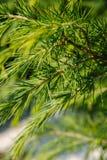 De winterboom closse omhoog Royalty-vrije Stock Fotografie
