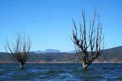 De winterboom die zich in meer met vogels bevinden Stock Foto's