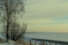 De winterboom door de rivier royalty-vrije stock afbeelding