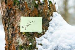 De winterboom onder de sneeuw in de stralen van de zon Achtergrond sluit royalty-vrije stock afbeelding