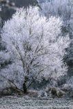 De winterboom op een sneeuwweide, rijm op boom Stock Foto's