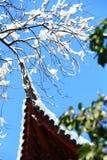 De winterboom op het dak Royalty-vrije Stock Afbeeldingen