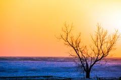 De winterboom op strand bij zonsondergang Stock Afbeelding