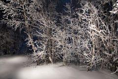 De winterboom van de middernacht Royalty-vrije Stock Foto's