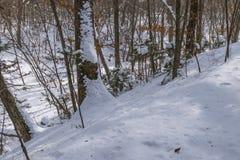 In de winterbos royalty-vrije stock foto