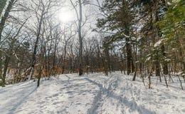 In de winterbos royalty-vrije stock foto's
