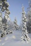 De winterbos Stock Foto