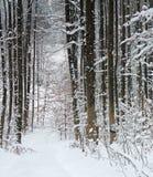 De winterbos Royalty-vrije Stock Foto