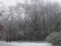 De winterbos 1 Stock Afbeelding