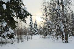 de winterbos Royalty-vrije Stock Afbeeldingen