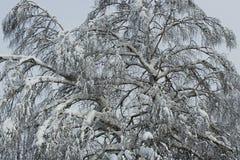 de winterbos Stock Foto's