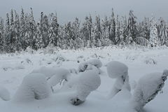 de winterbos Stock Afbeelding