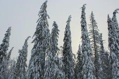 de winterbos Stock Afbeeldingen