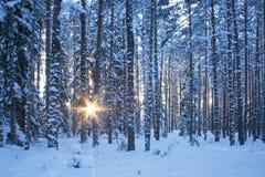 De winterbos in avond royalty-vrije stock foto's