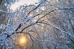De winterbos bij zonsondergang Royalty-vrije Stock Foto's