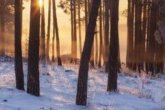De winterbos bij zonsopgang Zonlicht in sneeuwbos royalty-vrije stock foto's