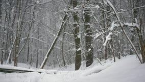 De winterbos, bomen in de sneeuw, lichte sneeuwdalingen stock video