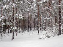 De winterbos buiten Hudiksvall - Swden Stock Afbeeldingen