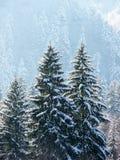 De winterbos in Carpathians_2 Royalty-vrije Stock Foto