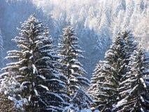 De winterbos in Carpathians_3 Royalty-vrije Stock Fotografie
