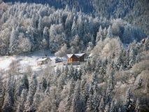 De winterbos in Carpathians_4 Royalty-vrije Stock Foto's