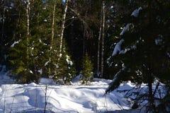 De winterbos in centraal Rusland royalty-vrije stock foto's