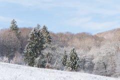 De winterbos dat in sneeuw wordt behandeld stock afbeelding