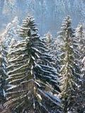 De winterbos in de Karpaten Stock Fotografie
