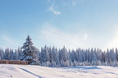 De winterbos en een stuk van omheining Royalty-vrije Stock Fotografie