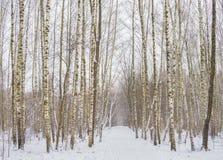 De winterbos met bomen behandelde sneeuw Stock Foto