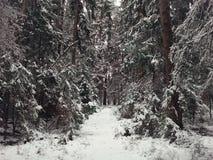 de winterbos met een voetpad stock foto's