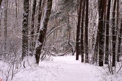 De winterbos met grote sneeuwafwijkingen Stock Foto