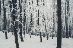 De winterbos met vorst op threes en witte sneeuw ter plaatse stock foto