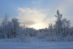 De winterbos na een sneeuwval op Kerstmis in de doden van winte Stock Fotografie