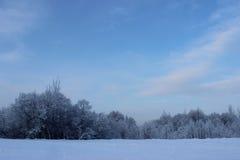 De winterbos na een sneeuwval op Kerstmis in de doden van winte Stock Afbeeldingen
