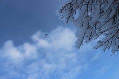 De winterbos na een sneeuwval op Kerstmis in de doden van winte Royalty-vrije Stock Foto