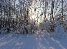 De winterbos na een sneeuwval op Kerstmis in de doden van winte Royalty-vrije Stock Foto's