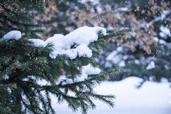 De winterbos, Nieuwjaar` s stemming Royalty-vrije Stock Foto's