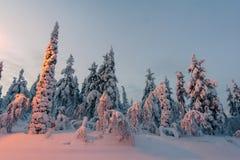 De winterbos in noordelijk Finland Stock Foto