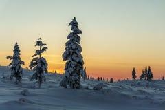 De winterbos in noordelijk Finland Royalty-vrije Stock Fotografie