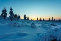 De winterbos in noordelijk Finland Stock Afbeelding