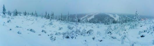 De winterbos in noordelijk Finland Stock Fotografie