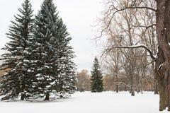De winterbos of park met sparren en sneeuw Stock Afbeeldingen