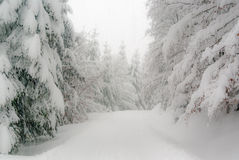 De winterbos in Thuringia Stock Afbeelding