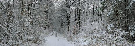 De winterbos van het sprookje Stock Fotografie
