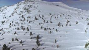 De winterbos van hierboven stock video