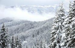 De winterbos van Rhodope Royalty-vrije Stock Foto's