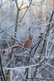 De winterbos in Wit-Rusland, Oost-Europa Royalty-vrije Stock Fotografie