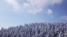 De winterbos in zonnig weer, sneeuwvlokkendaling Lucht Mening stock video