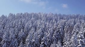 De winterbos in zonnig weer, sneeuwvlokkendaling Lucht Mening stock video